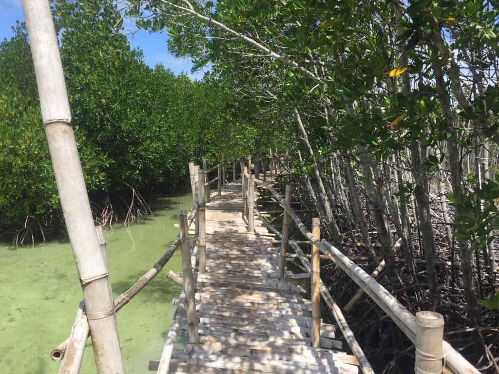 Bantayan Island Philippines Obo Ob Mangrove Eco Park Bamboo Walkway Scenic View